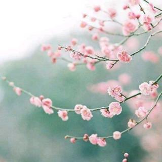 盛放 · Blooming  Season - 林海