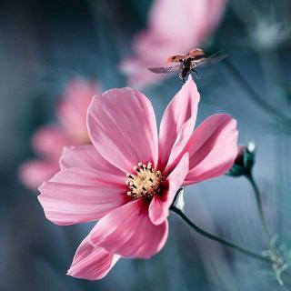 用一朵花开的时间,遇见
