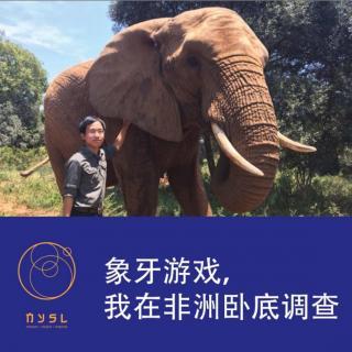 第142期:象牙游戏,我在非洲卧底调查