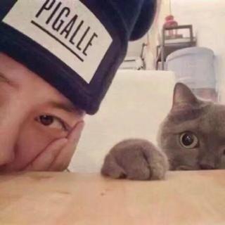 一个人一只猫还有未来的你