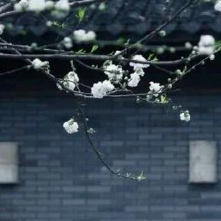 《云淡风轻,细语流年》作者:雪遥