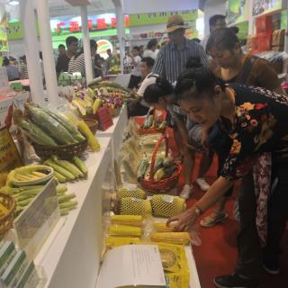 """Agricultores disfrutan de dulce sabor de éxito en """"hogar del maíz"""""""