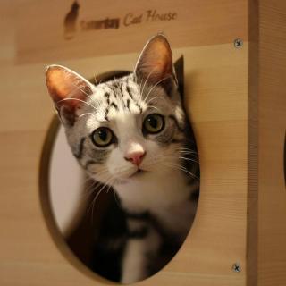 《猫》-一个再也不养猫的人的诉说-郑振铎