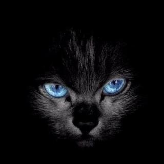 猫在监视我