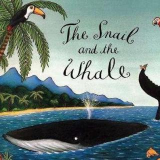 【毛毛阿姨的故事屋】小海螺和大鲸鱼