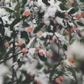 大雪:在最特别的时光,遇见最特别的你