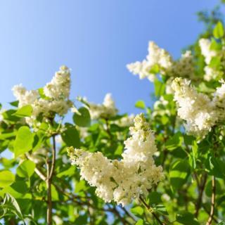 用心说   一棵开花的树