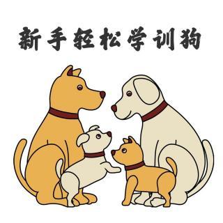 常见的错误的训狗、养狗方式你有没有犯?