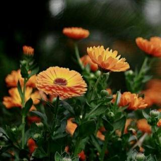 少儿学诗歌——《春的消息》