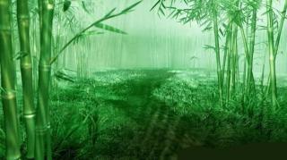 下雨声纯雨声-屋顶-大自然声音