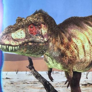 30-【】恐龙探秘(恐龙能活几岁呢)
