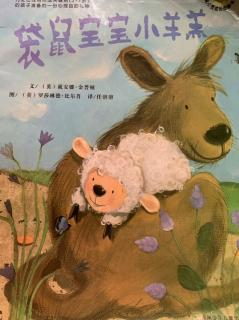 袋鼠宝宝小羊羔