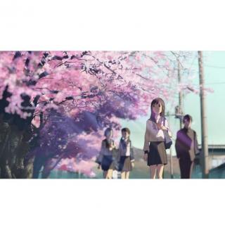 【睡前轻音乐】听说樱花飘落的速度,是每秒五厘米 (via唐鸣)