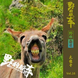 野狗杂谈Vol.16 - 大傻子