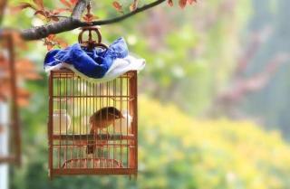 香港的鸟——汪曾祺