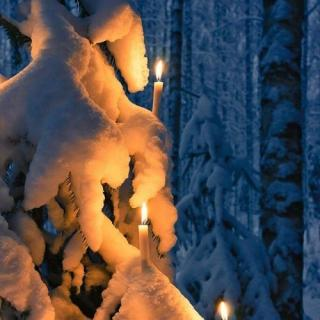 雪,落在雪上 作者:踏秋而歌 朗诵: