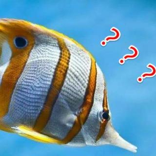 如何淹死一条鱼?