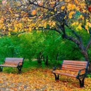 阿里老师收集的《由秋雨引发的诗歌大接龙》