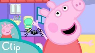 第28周 spider web