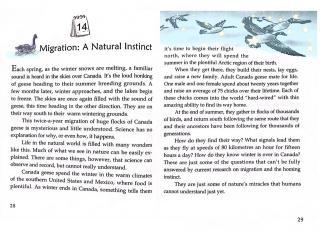 Migration: A Nature Instinct-20191014