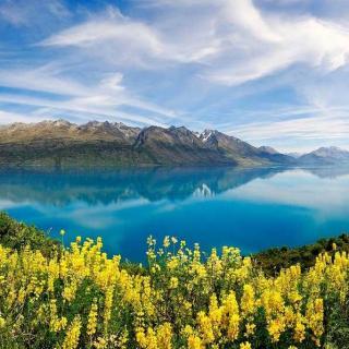 新西兰 | 你再看一个春天