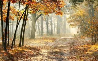 史铁生:秋天的怀念