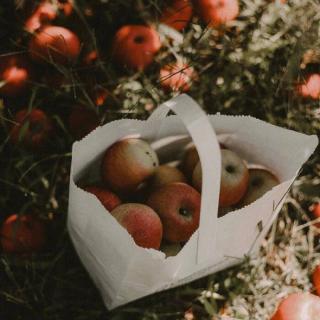 544 两个人的苹果林(文/冬蛰先生)