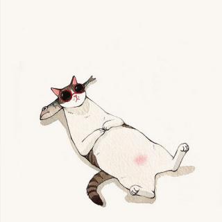 用心说   猫