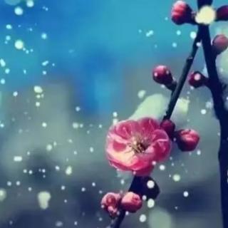 我为寒梅,你为飞雪       文/杨传玲