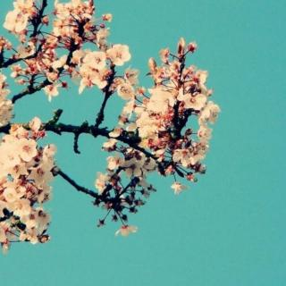 magnolia-keshi