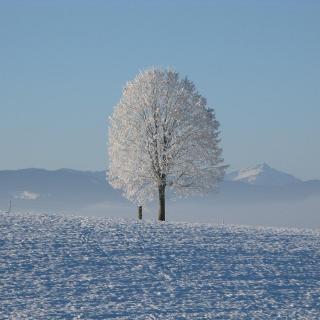 【唯美散文-英】雪落下的声音