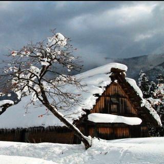 «雪落,如你来»作者:雪儿