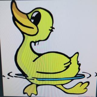 故事《小小鸭子学游泳》