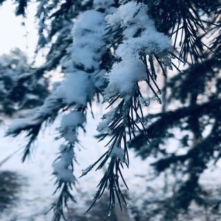 冬日的宁静