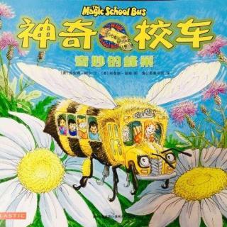 【定制故事】神奇校车⭐️奇妙的蜂巢