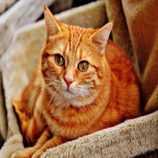 村上春树:大智若猫