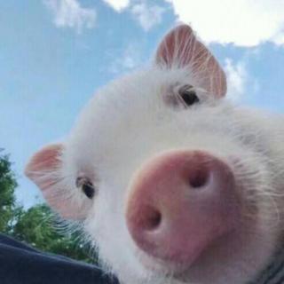 睡前故事-《勇敢的小猪宝宝》