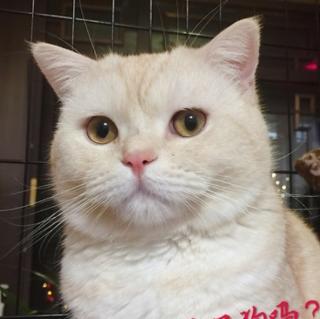 《我是猫》第九章<3>