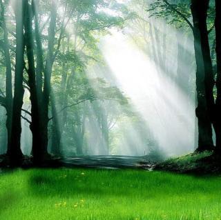 大自然的声音7- 奇幻森林
