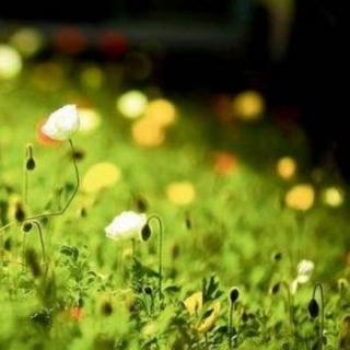 春天从正月出走(作者 朗读 熊刚)