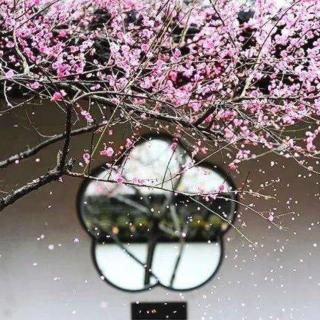 杏花,春雨,江南