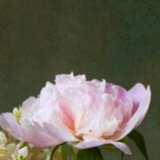 任玳瑶背诵《三月桃花水》