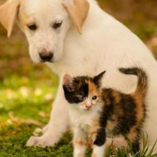 小花猫和小狗的故事