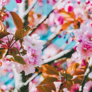 冰心:一日的春光