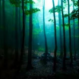【Cool Forest Rain 微凉森林雨】——Dan Gibson
