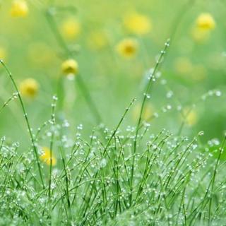 《春》作者朱自清
