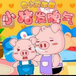 爱发脾气的小猪