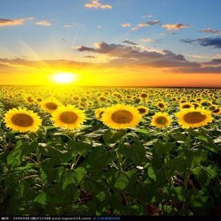 做一朵太阳花吧