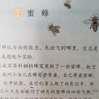 李梦老师 朗读三下14.《蜜蜂》🐝