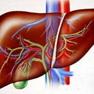你知道为什么肝肾同源了吗?